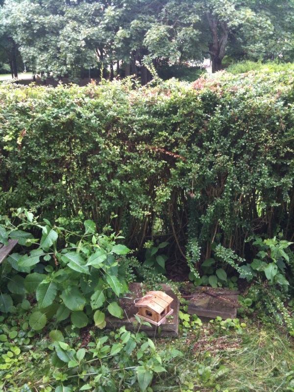 Trädgård, tagen med iPhone 3GS